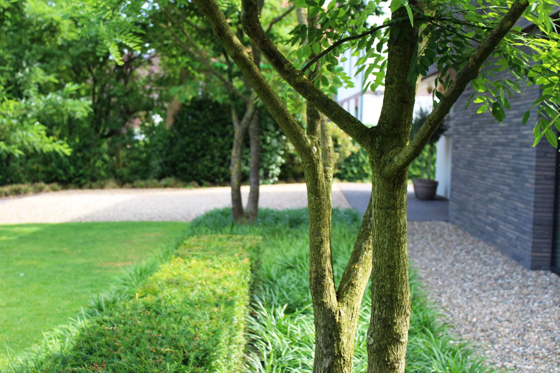 Tuinaanleg in nijmegen door uw tuin hoveniers de enige echte expert